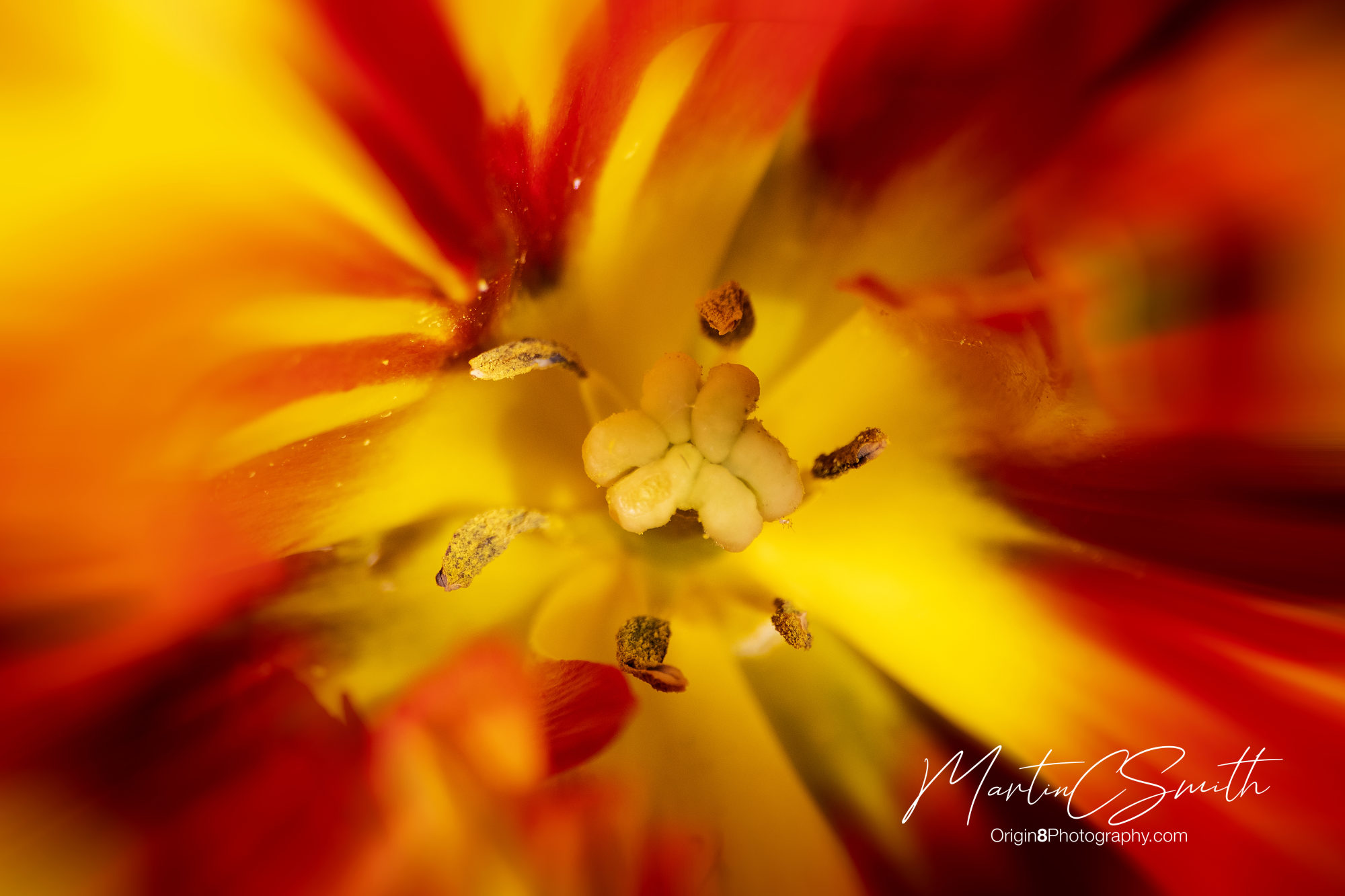 Red/Yellow flower detail